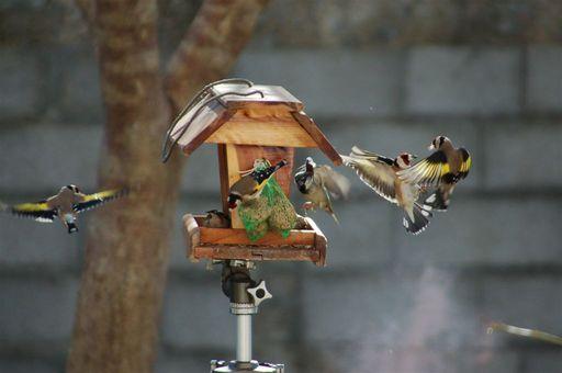 les oiseaux de nos contrées 23_jan12