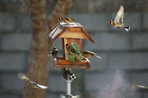 les oiseaux de nos contrées 23_jan13