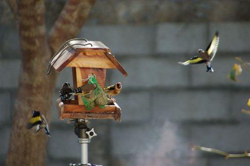 les oiseaux de nos contrées 23_jan14