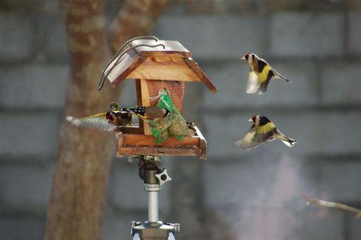 les oiseaux de nos contrées 23_jan15