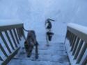 Premier hiver de Fay et Alice!!! Dscf0611