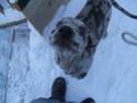 Premier hiver de Fay et Alice!!! Dscf0612