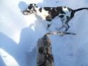 Premier hiver de Fay et Alice!!! Dscf0615