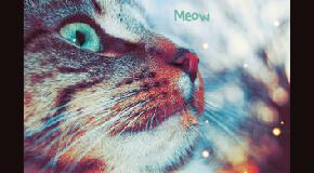 Galerie d'Emie Meow10