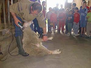 le mouton Mouton10