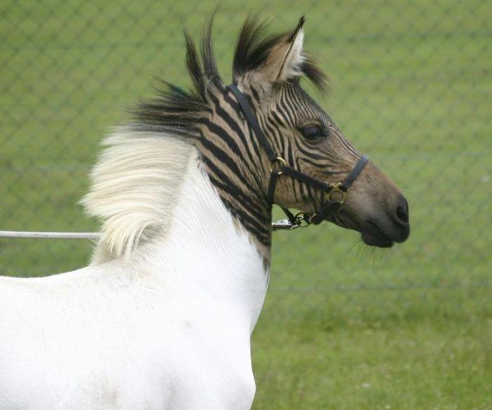 Bizarre ce cheval! Zorse310