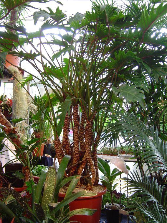 Gardenia 2010 Garden13