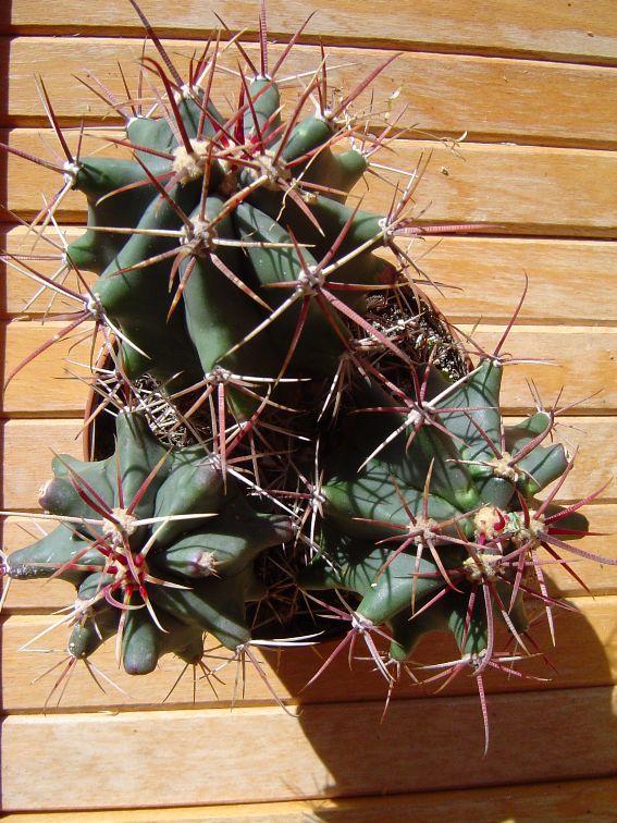 Gardenia 2010 Garden16