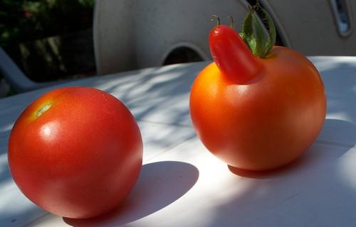 Légumes aux formes bizzares. Couple10