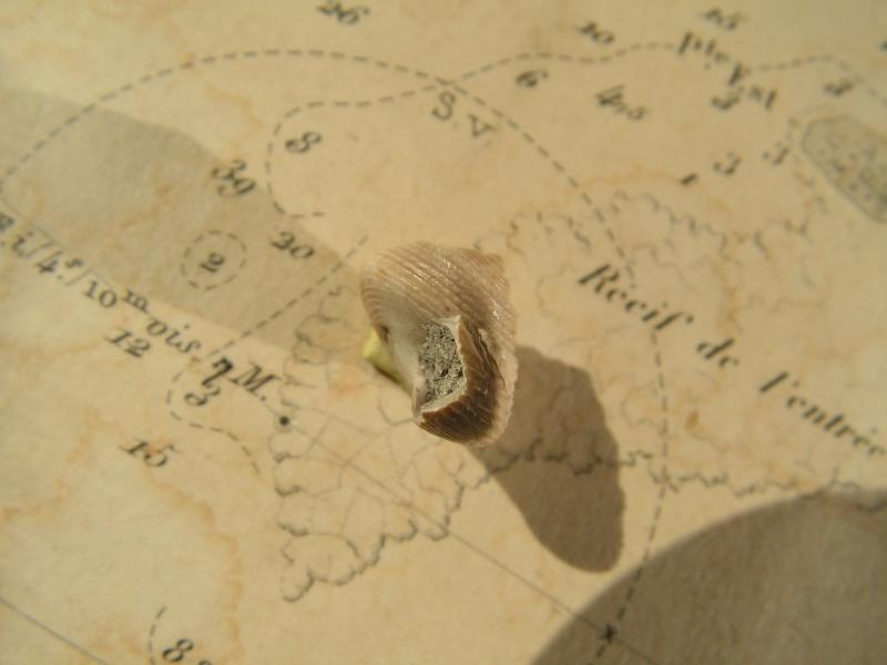 [résolu]Monodonta amedei turonensis Pict9912