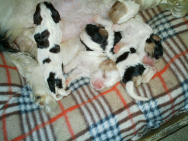 puppies New_bo11