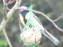 les oiseaux de nos contrées P1030011
