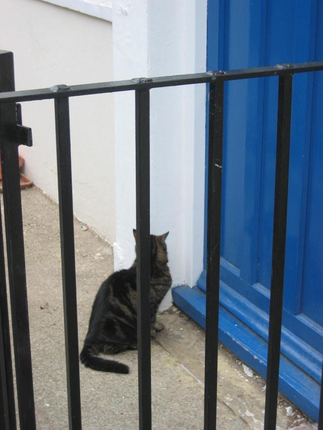 Αγγλό-γατες!!! - Σελίδα 2 Img_0411