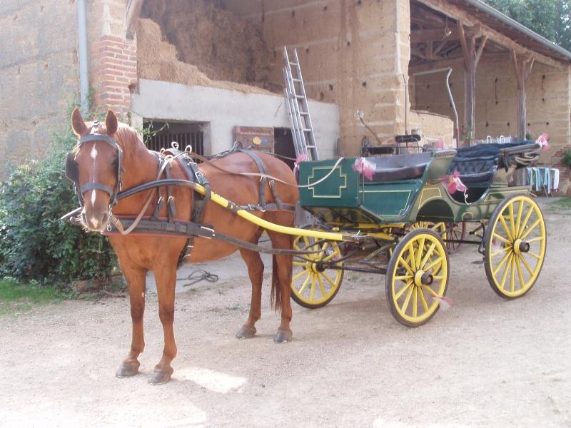 L'élevage de cavalier01 P2070010