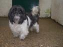 Lisa (chien) Lisa_112