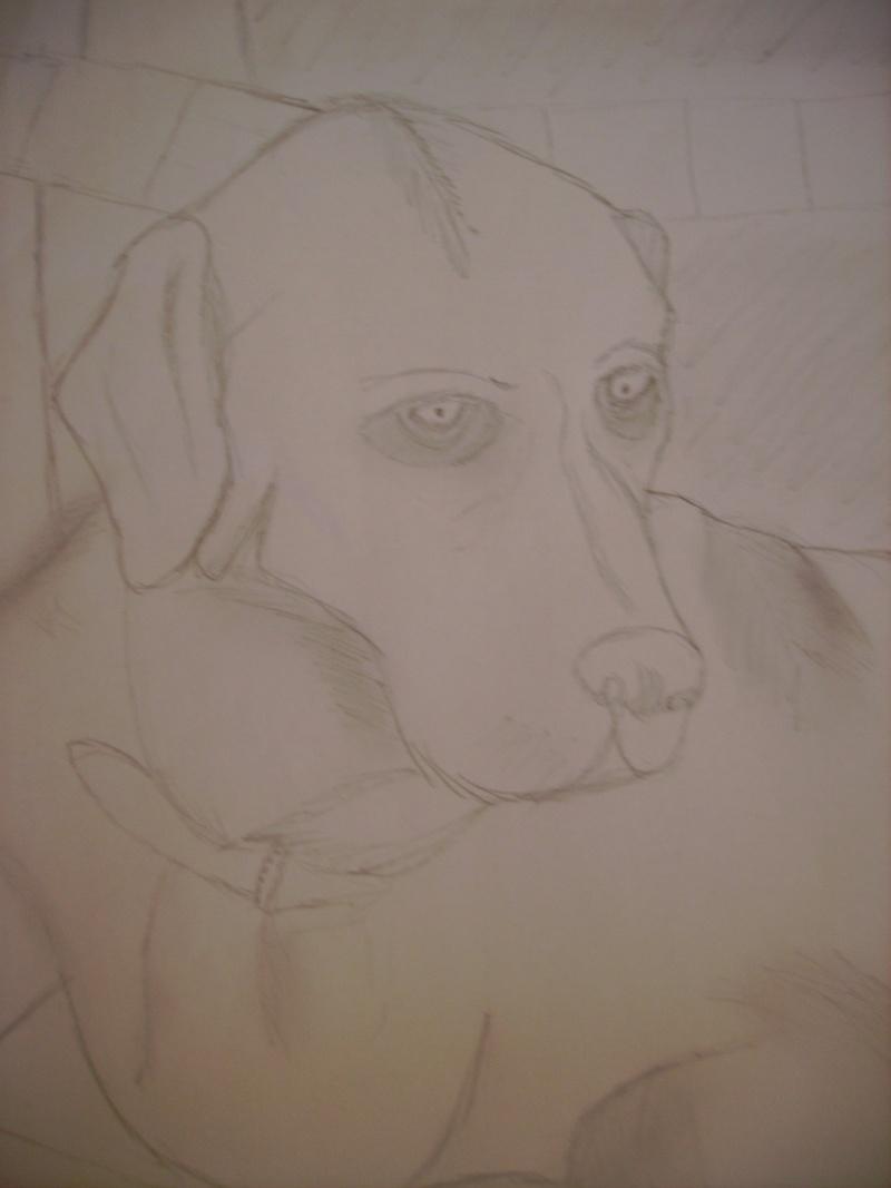 voila quelque dessin que j'ai fait ... Imgp0416