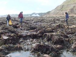 International Beach Clean up & PADI Project AWARE Dscf1310