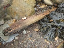 International Beach Clean up & PADI Project AWARE Dscf1320