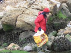 International Beach Clean up & PADI Project AWARE Dscf1325