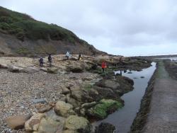 International Beach Clean up & PADI Project AWARE Dscf1327
