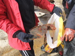 International Beach Clean up & PADI Project AWARE Dscf1419