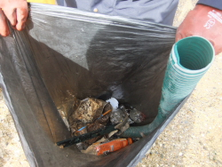 International Beach Clean up & PADI Project AWARE Dscf1420