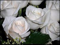 Nje tufe lule mbi varrin e Aristidh Koles Whiter10