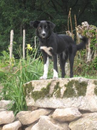 lutèce  ma nouvelle chienne 2_210