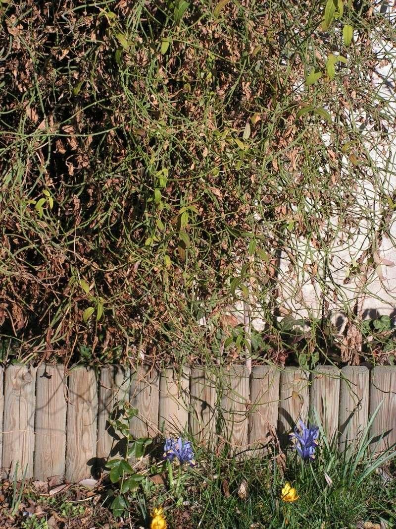 jardin Dr Jekyll 10 février 2008 Pict0019