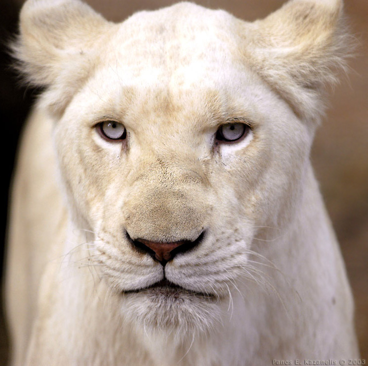 fotos de animales sorprendentes White_10