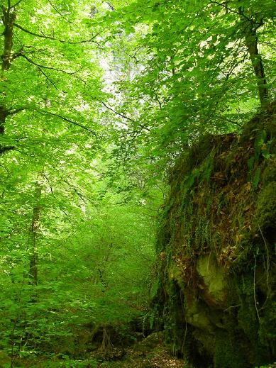 La vallée de la Sumène Dscn5812