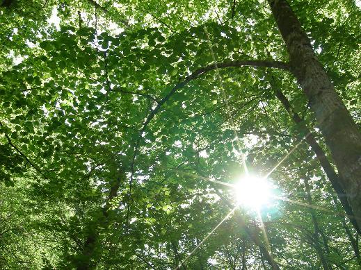 Le bois de Janiac (Saignes) Dscn5813