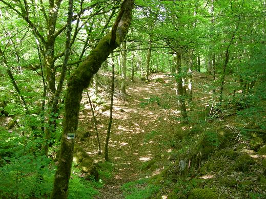 La vallée de la Sumène Dscn5814