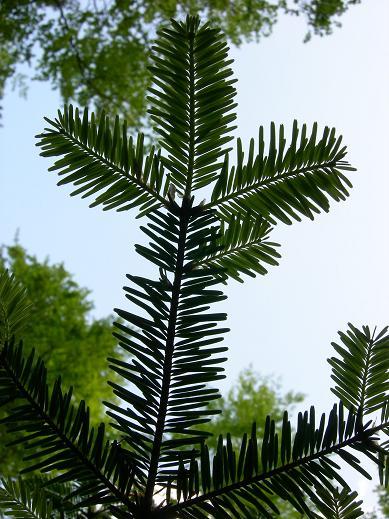 Le bois de Janiac (Saignes) Dscn5816