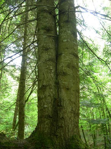 Le bois de Janiac (Saignes) Dscn5822
