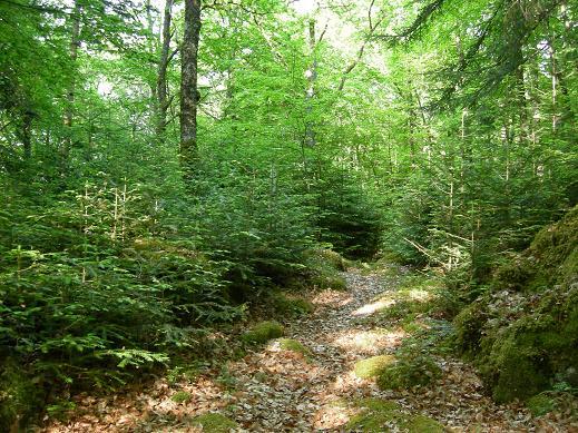 Le bois de Janiac (Saignes) Dscn5823