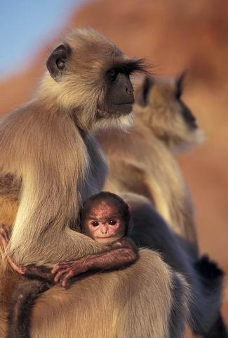 fotos de animales sorprendentes 00110