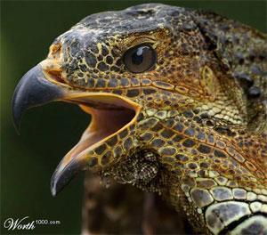 fotos de animales sorprendentes Pajaro10