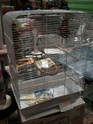 Choisir une cage Img_0711
