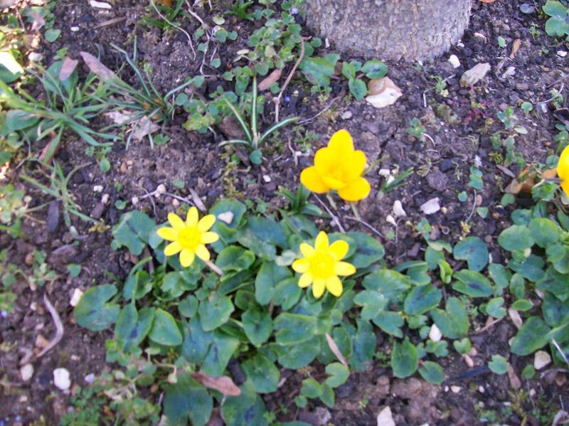 Actualité de nos jardins 15-02-11