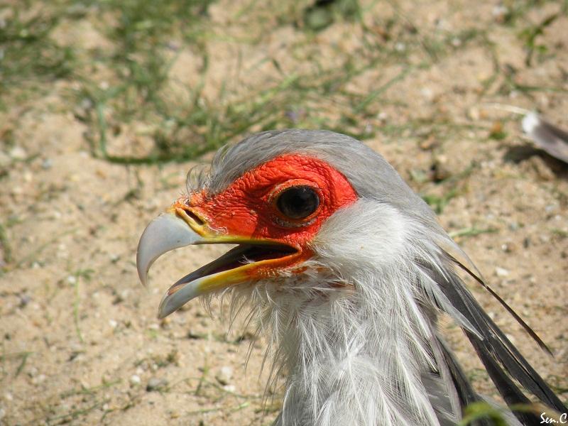 Visites à Pairi Daiza (Belgique)... Saison 2011 0116