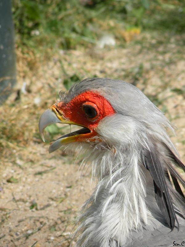 Visites à Pairi Daiza (Belgique)... Saison 2011 0216