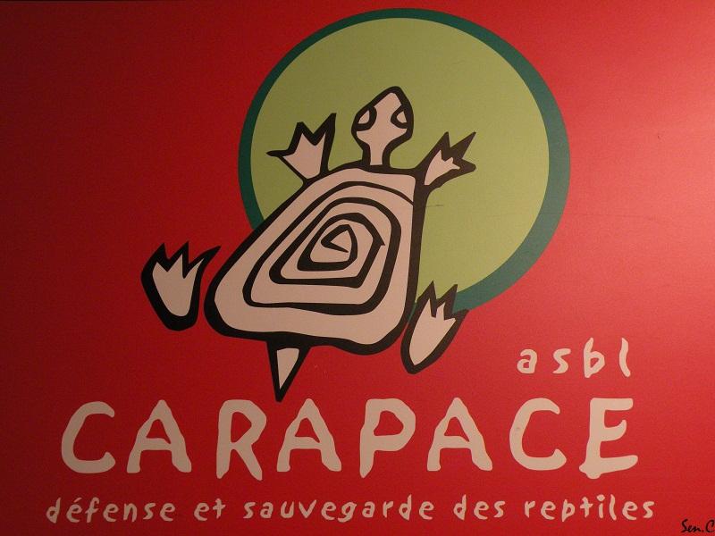 Visites à Pairi Daiza (Belgique)... Saison 2011 2010