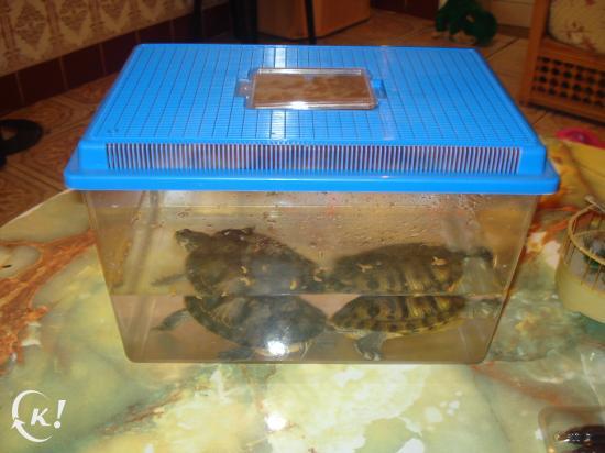 vente de tortues de mer! Lol 89110110