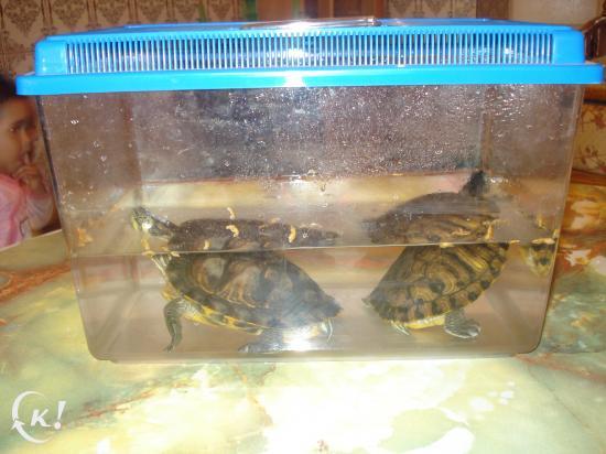 vente de tortues de mer! Lol 89252810