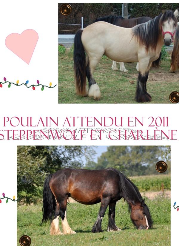 Ecurie de Tine:les faire parts de naissances 2011 Charle10