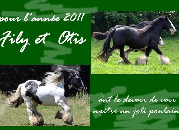 Ecurie de Tine:les faire parts de naissances 2011 Filye_11