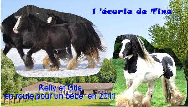 Ecurie de Tine:les faire parts de naissances 2011 Kelly_11
