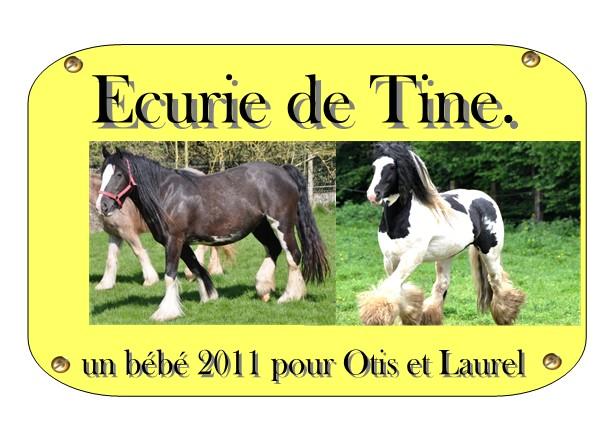 Ecurie de Tine:les faire parts de naissances 2011 Laurel10