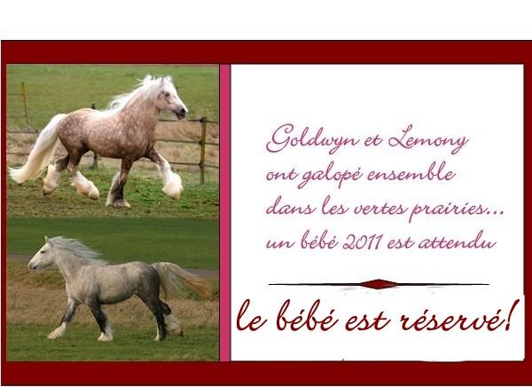 Ecurie de Tine:les faire parts de naissances 2011 Lemony14